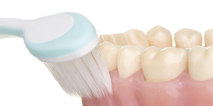 虫歯や歯周病から、あなたの大切な歯を守るために